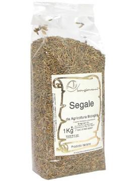 Rye grains 1Kg - Organic