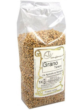 Soft wheat grains 1Kg - Organic